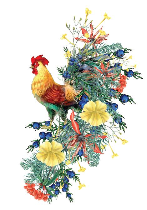 sam rooster -01